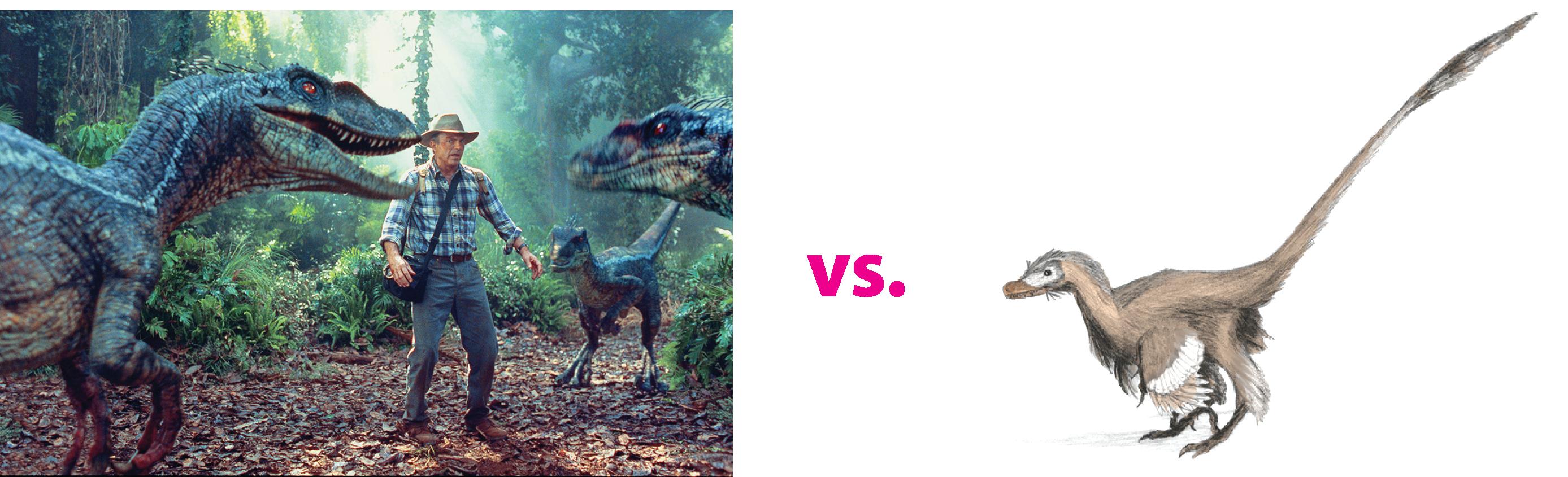 Velociraptor - Film und echt